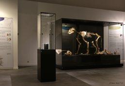 Musée du Malgré Tout